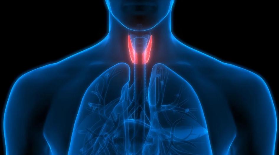 Tiroides: el hipotiroidismo afecta a dos millones de argentinos